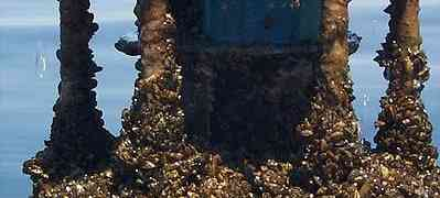 Environmental Threat : Invasive Species