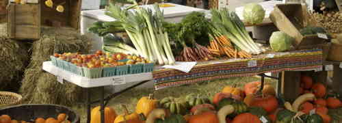 Organic Food For Green way of life