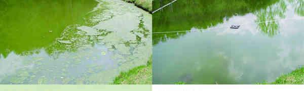 Algae Control To Keep Ponds Clean