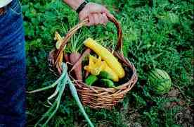 Healthy Organic Garden