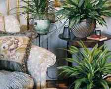 House Plants Keep Your Home Air Clean
