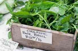 Organic Gardening Tips That you Should Know