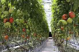 Vertical Farming at Home