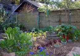 How to Grow Your Own Food With Backyard Gardening